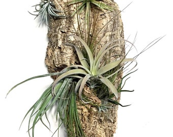 Air Plant Wall Hang: Vertical Garden, Air Plant Holder, Air Plant Garden