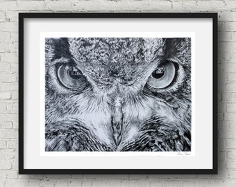 Owl Pencil  Drawing Art Print 16x20