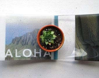 Kauai Kalalau Fused Glass Dish/Plate