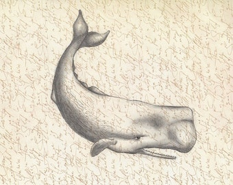 Sperm whale 8x10 art print of original pencil drawing