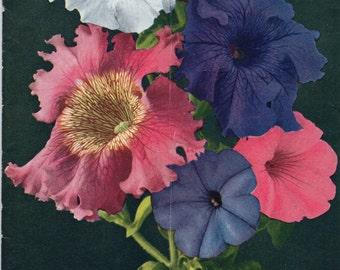 Vintage 2 ea, Milot-Mills Co. Wenatchee Washington Plant Catalogs 1940 & 41 Roses, Trees, Flowers, Lawns, Vegetables, Cut Flowers MORE