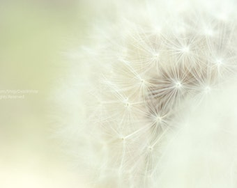 Dreamy Dandelion -Nature Floral Wall Art -Home Decor -Pastel Green & White And Bokeh -Fine Art Photograph On Metallic Paper -Bedroom Decor