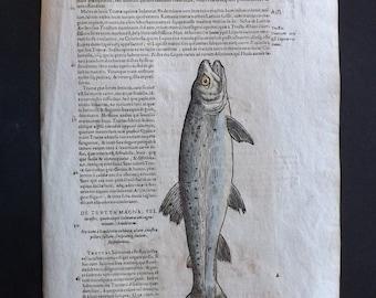 Gesner 1617 Hand Col Print. Salmon 1003