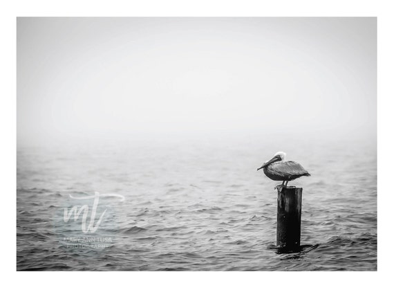 Brown Pelican Perched on a Piling in Lake Pontchartrain
