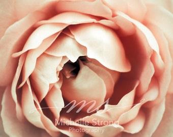 Macro Photography, Nature Prints, Rose Photography, Fine Art Photography, Botanical Prints, Floral Photography,  Flower Print Wall Art,