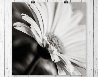 Daisy Print Black and White Flower Print Daisy Art Print Flower Art Home Decor Nature Photography Flower Photography Daisy Wall Art Fine Art