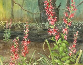 Cardinal Flower giclee print