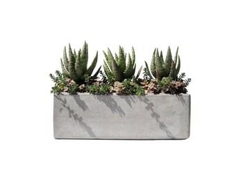 Succulent mix in a white clam shell ceramic pot dish garden - Rectangular succulent planter ...