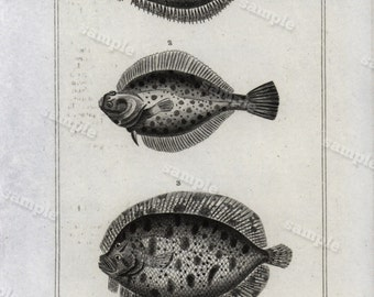 1825 Fish engraving from comte de LACEPEDE - Black and white- art decor- wall art- home decor- Original Fish Engraving Poissons