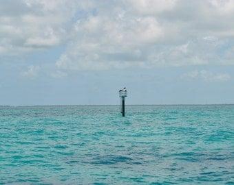 Original photography from the Florida Keys