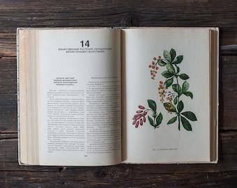 Vintage Illustrated Botanical Book - Vintage Plant Illustrations, Botanical Illustrations