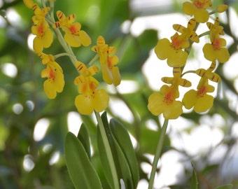 Polymer clay Flower, Yellow Oncidium Medium Orchid - Stem flower ONLY