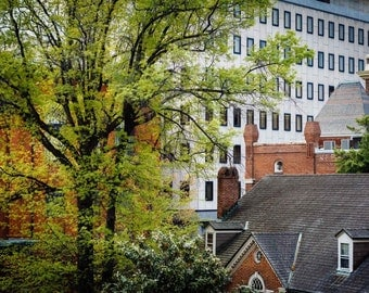 View of trees and buildings in downtown Baltimore, Maryland.   Photo Print, Stretched Canvas, or Metal Print.