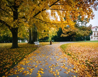Autumn color and walkway at a park, in Prague, Czech Republic - Photography Fine Art Print or Wrapped Canvas