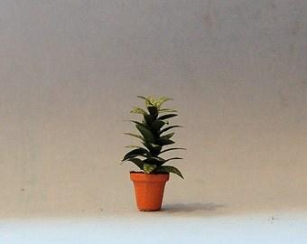 1/2 inch scale miniature-Aglaonema Plant
