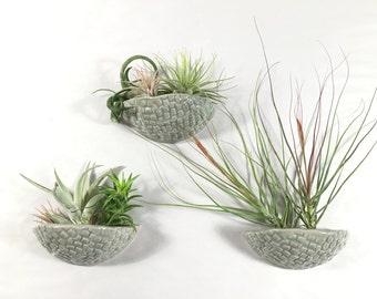 air plant wall pocket / sconce planter / air plant hanger / hanging planter / soft green jade