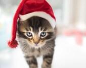 Photograph of Santa Kitten
