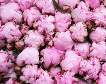 Pink Peonies Print - Columbia Road Flower Market Photography - London Flowers