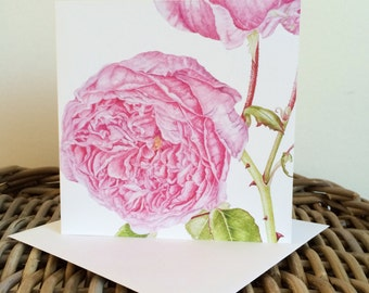 Rosa 'The Alnwick Rose'  art card - blank inside