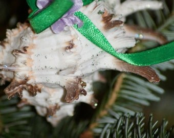 Murex Seashell Ornament, Seashell Christmas Ornaments
