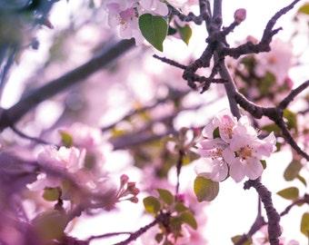 Cherry blossom art print, pink flower wall art, botanical nature photography print, Ikea Ribba sizes
