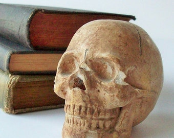 Vintage Skull / Tiny Plaster Museum Quality Human Skull Replica / Small Vintage Display Piece