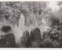 Old Jewish Cemetery - Vintage Cemetery Photograph - Heřmanův Městec