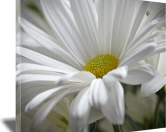 Daisy, Flower Photography, White Daisy, White Flower, Canvas Wrap, Wall Art, Home Decor, Nature Photography, Bedroom Decor, Sue Overson