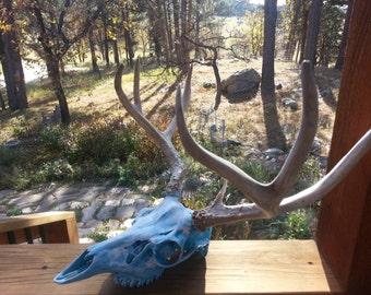 Hand painted deer skull with antlers