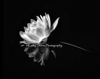 Water Lily, white water lily, black and white photography, fine art photography,  wedding or anniversary gift, FREE SHIPPING