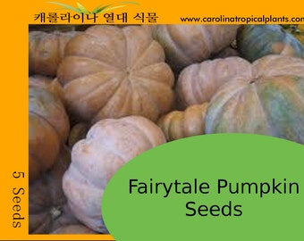 Fairytale Pumpkin Seeds - 5 Seeds