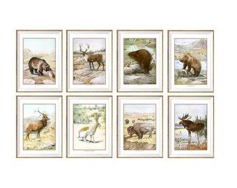 Animals Art Print SET of 8. Animals prints, animals wall art, animals wall decor, wildlife prints, wildlife artwork, rustic animal prints