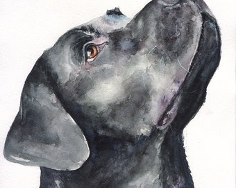 Black Labrador Retriever Print of the Original Painting Dog Labrador puppy Funny Cute Nice Sweet Watercolor