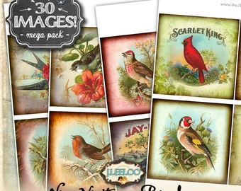 THE BIRDS 4x4 inch square digital collage sheets - coaster greeting cards card making magnets - instant download printable -big bundle qu480