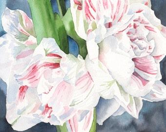 Amaryllis, 8 x 10 Watercolor Print
