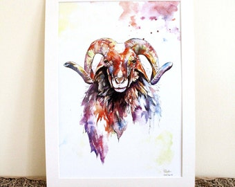 Stan The Ram Limited Edition A3 Painting Watercolour Colour Print