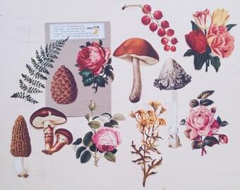 Vintage Style Botanical Ephemera