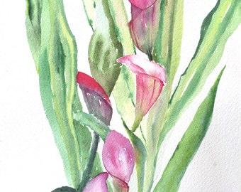 Calla Lilies - 8x10 Original Watercolor Painting - nature art, pink flowers, impressionist, unique gift