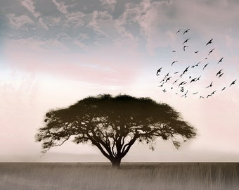 The Solitaire Photography, Photo Landscape, Lonely tree, South Africa, birds, pastels, bright sky, Fine Art Print, Minimalist