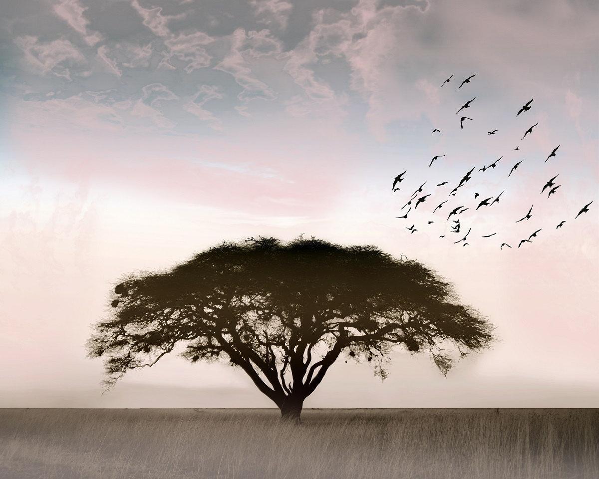photographie le solitaire photo paysage arbre solitaire