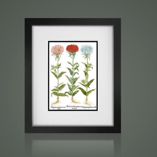 Botanical Print Matted And Framed Botanical Print Free