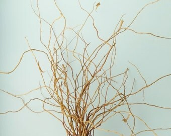 Willow Branches Decorative Curly Willow Branch Bundle of 25 Floral Supply Twigs
