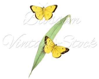 Vintage Print, Yellow Butterflies Wall Decor, Butterflies Digital Image Printable, Clipart INSTANT DOWNLOAD 5x7, 8x10, 11x14 Included - 1423