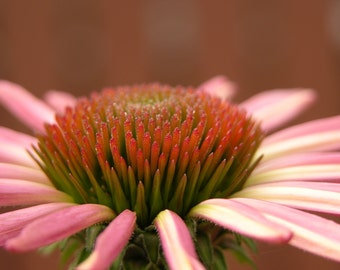 Pink Flower On Brown Photograph #37