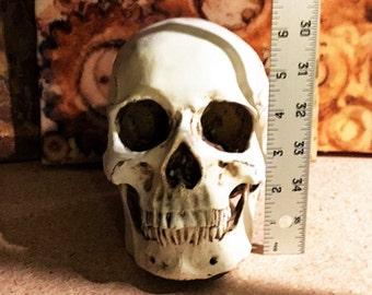 Life-size Human Skull made of Cast Resin - Halloweeen - Anatomy - Painted Skull