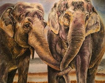 Éléphants dans l'amour