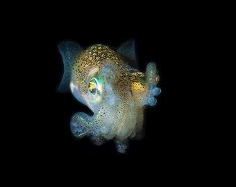 Squid print photo Underwater nature photography fine art ocean marine animal 8x12