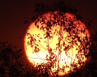 Sunset Behind Tree