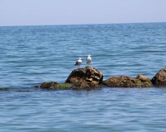 Seagulls on the Breaker