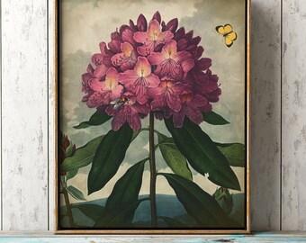 Rhododendron Botanical print, pink flowers poster, botanical wall decor, antique flower art print